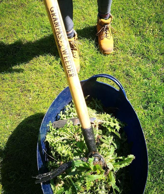 Tool Test - Grampa's Weeding Tool
