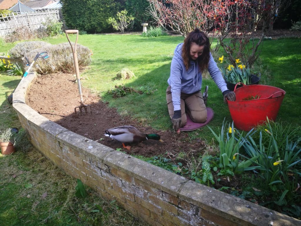 Louise Barby head of Garden Design and a Duck