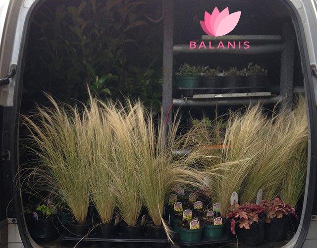 Balanis van full of plants for next Garden Design