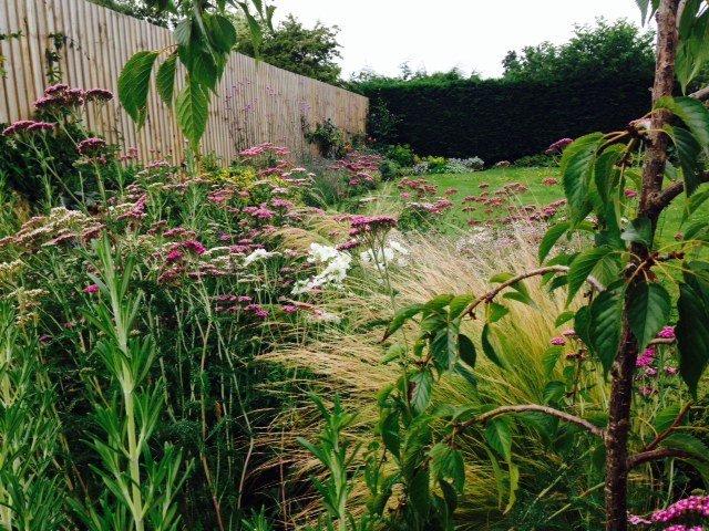 Mixed Grasses and Perennials in this Hunstanton Garden design
