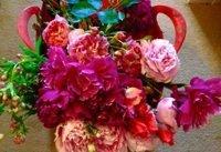Thornham – Cut Flowers
