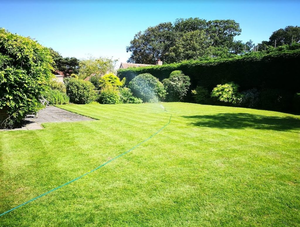A moss free green lawn - sprinkling the new grass seed in