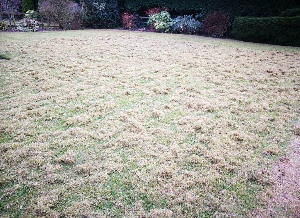 Scarify the lawn to remove the worst moss