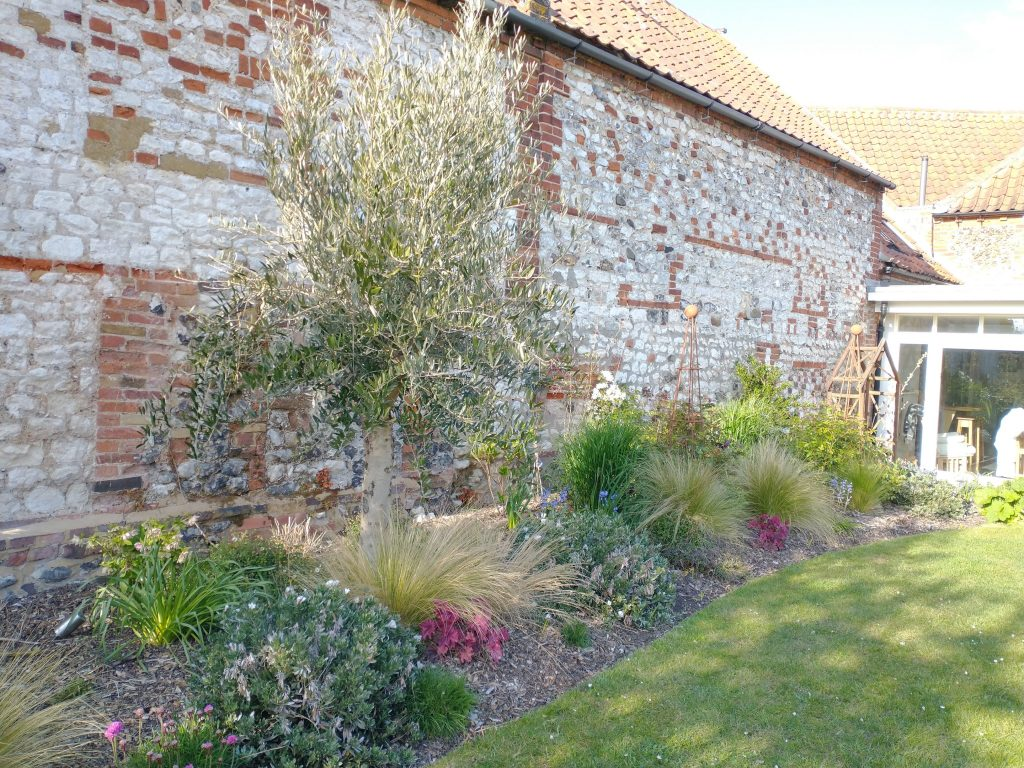 Garden Borders - 1 year after design and planting - centre piece Olive tree